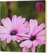 Lovely Pink Petals Wood Print