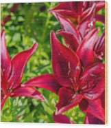 Lovely Red Lilies Wood Print