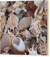 Lovely Seashells Wood Print