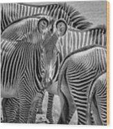 Lovely Stripes  7589bw Wood Print