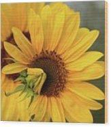 Lovely Sunflowers Wood Print
