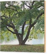 Lovely Tokyo Tree With Pond Wood Print