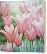 Lovely Tulips Wood Print