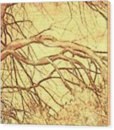 Lovely Twists In Nature Wood Print