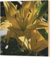 Lover's Lilly II Wood Print
