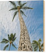 Low Angle View Of Palm Tree Wood Print