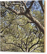 Low Angle View Of Trees In A Park Wood Print