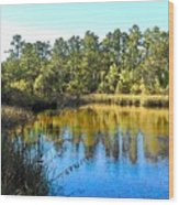 Lower Suwannee National Wildlife Refuge Ti Wood Print