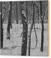 Lowland Winter Wood Print