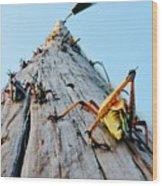 Lubber's Pole Wood Print