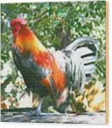 Luchenbach Rooster Wood Print
