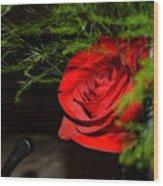 Lucius Red Rose Wood Print