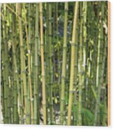 Lucky Bamboo Wood Print