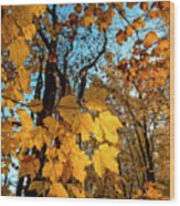 Luminous Leaves Wood Print