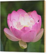 Luminous Lotus Blossom Wood Print