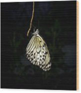 Luminous Paper Kite At Rest Wood Print