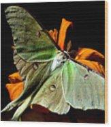 Luna Moth Wood Print