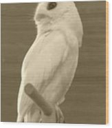 Luna The Rescued White Leucistic Eastern Screech Owl In Sepia Wood Print