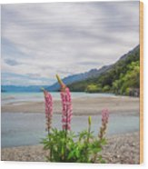 Lupin Flowers In Alpine Scenery At Kinloch, Nz. Wood Print