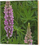 Lupin Siblings Wood Print