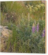 Lupine Among The Weeds  Wood Print