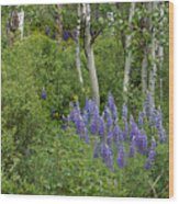 Lupine And Aspens Wood Print