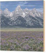 Lupine And Grand Tetons Wood Print by Sandra Bronstein
