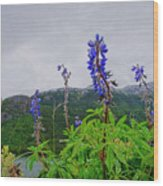 Lupine And Mountains Wood Print