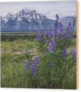 Lupine Beauty Wood Print
