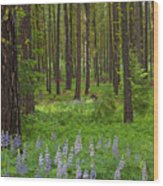 Lupine Carpet Wood Print
