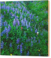 Lupine Cornucopia Wood Print
