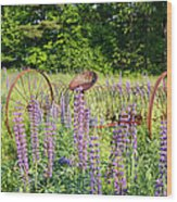 Lupine Festival - Sugar Hill New Hampshire Usa Wood Print