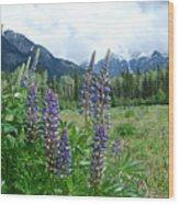 Lupine In The Alpine Wood Print