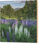 Lupine In The Valley Wood Print