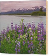 Lupine Of The Copper River Delta Wood Print