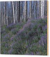Lupine On Mt. Washburn - Yellowstone Wood Print