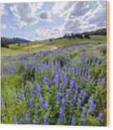 Lupine Pass Wood Print