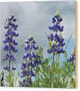 Lupines Against The Sky Wood Print