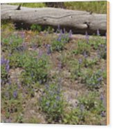 Lupines And A Log Wood Print
