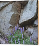 Lupines And Rock Face Wood Print