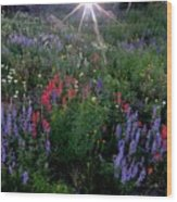 Lupines And Sun Wood Print