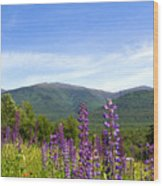 Lupines And The Presidentials Wood Print