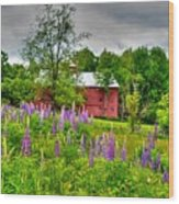 Lupines And The Red Barn Wood Print