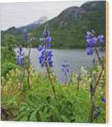 Lupines And Water Wood Print
