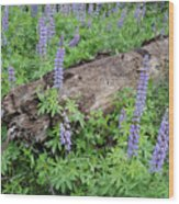 Lupines And Windfall Wood Print