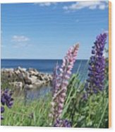 Lupines At Lake Superior Wood Print