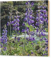 Lupines At The River Wood Print