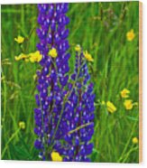 Lupins And Buttercups Wood Print