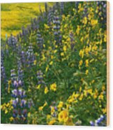 Lupins And Daisys Wood Print