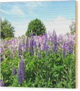 Lupins And Flocks Wood Print